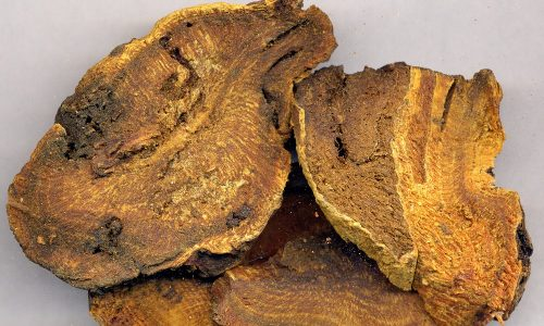 На начальных стадиях заболевание лечится отваром из корня ревеня