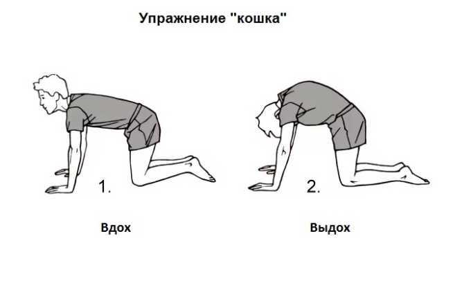 Упражнение «Кошка» для расслабления мышечной ткани спины и улучшения гибкости позвоночного столба