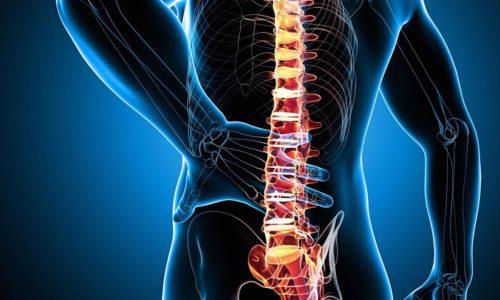 Являясь заболеваниями позвоночника, протрузия или грыжа могут нарушить его работу и ухудшить кровообращение в головном и спинном мозге