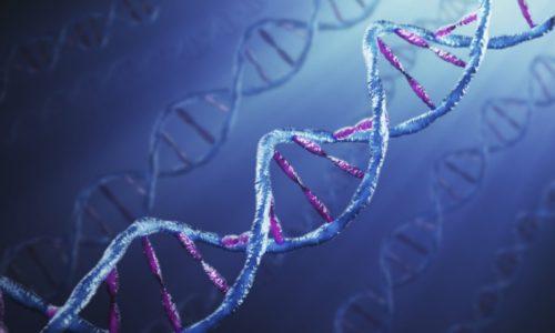 Формированию пупочной грыжи способствует генетическая предрасположенность