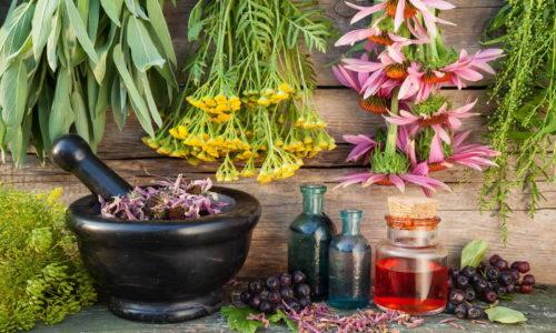 Ускорить пищеварение и избежать запоров при грыже пищевода поможет сбор из листьев мать-и-мачехи, коры красного вяза, корня алтея и семян льна