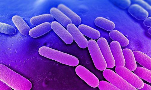 Грыжи почти всех видов могут поражаться патогенной микрофлорой и воспаляться
