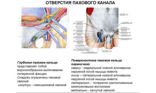 При защемлении процесс кровообращения в пристеночном листке полости брюшины и во внутренних органах, попавших в мышечный разъем, нарушается